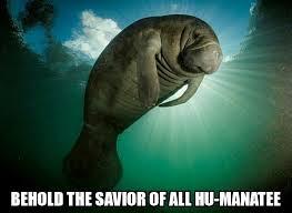 Manatee Meme - majestic af meme by dcnight memedroid