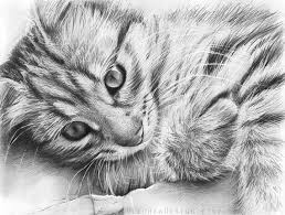 138 best 16 cats u0026 art pencil u0026 charcoal drawings images on