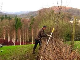 maximising your garden in the winter landscape gardeners cumbria