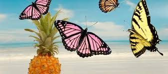 the curious linguistic history of pineapples and butterflies