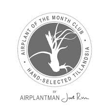 plant of the month club airplant of the month club 4 months airplantman