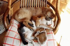 alimentazione casalinga gatto alimentazione casalinga e gatto costi a chi chiederla