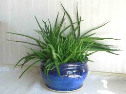 easiest plants and flowers to grow at home diy better homes