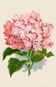 instant art printable download hydrangea botanical print the