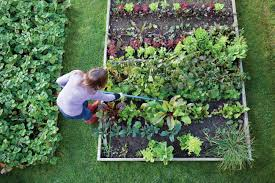 raised bed vegetable garden planting vegetable garden ideas