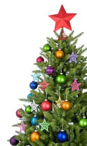 live christmas tree enjoy the holidays with a live christmas tree that lasts