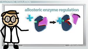 enzymatic reactions inhibition and regulation video u0026 lesson
