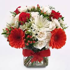christmas flowers beautiful christmas flower gift