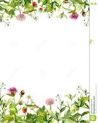 blossom flowers spring grass herbs floral frame border