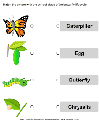 butterfly cycle match pictures with correct name