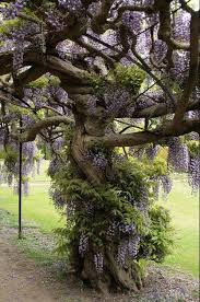tangled tree tangledregaleerieethereal pinterest tangled