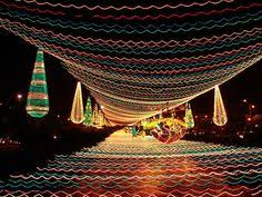Rhema Christmas Lights Rhema Christmas Light Display Is A Must See Holiday Event In