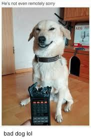 Bad Dog Meme - he s not even remotely sorry aeg bad dog lol bad meme on sizzle