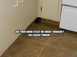 Scared Cat Meme - scary cat memes quickmeme