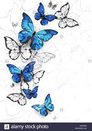 flying blue butterflies morpho and white butterflies on a light