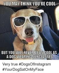 Cool Dog Meme - 25 best memes about cat riding dog cat riding dog memes