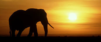 Blind Men And The Elephant Story For Children Role Of Matriarch Elephant