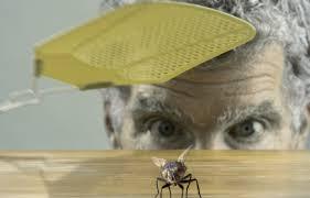 chasser les moucherons dans la cuisine les mouches comment s en débarrasser tout pratique