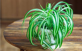 6 bathroom plants you u0027ll hardly ever have to water soakology
