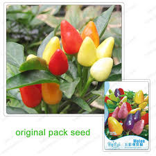 aliexpress buy 35 seeds pack multicolored ornamental chili