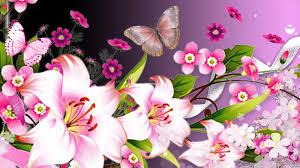 hd lilies white butterflies bright wallpaper fd