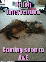 Intervention Meme - lolcats intervention lol at funny cat memes funny cat pictures