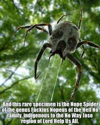 Cute Spider Meme - new species of spider found in the australian outback see this is