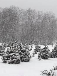 schrempp u0027s christmas tree farm home facebook