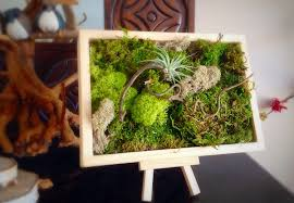 moss art wall hanging garden vertical garden living wall