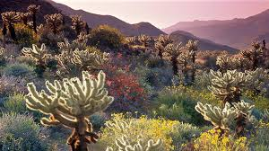 anza borrego signs point to banner bloom at anza borrego desert nbc 7 san diego