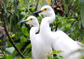 10 spectacular bird watching sites in india you cannot afford to