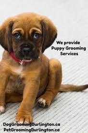 46 best stephanie u0027s pet grooming services images on pinterest