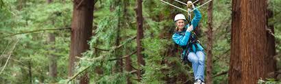 Treetop Canopy Tours by Mount Hermon Mount Hermon Adventures Adventures