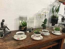 rosehouse on south broadway offers weird plants for real life