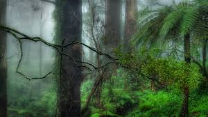 spooky desktop wallpaper forests goes welcome mossy mysterious jungle trees forest