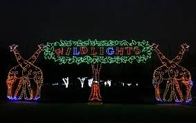 zoo lights at hogle zoo love the detroit zoo love holiday lights vote for wild lights to