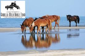 North Carolina wildlife tours images Top outer banks wild horse tours for 2017 jpg
