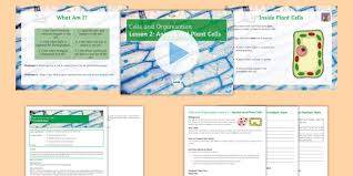 ks3 specialised cells activity sheets
