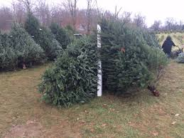 local christmas tree farm opens its doors for the season wane
