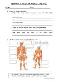 bones and muscles worksheet free esl printable worksheets made