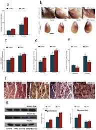 cerium oxide nanozyme modulate the u0027exercise u0027 redox biology of