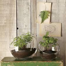 jardin interieur design design d u0027intérieur de maison moderne pot design plante d