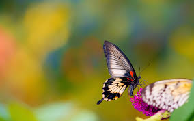 Best Photography Butterfly High Quality Best Photography Hd Wallpapers Rocks