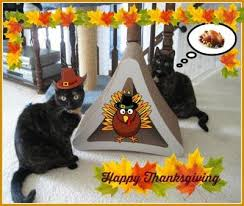 happy thanksgiving 2014 the conscious cat