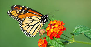 does a butterfly remember being a caterpillar 7w0w seven words