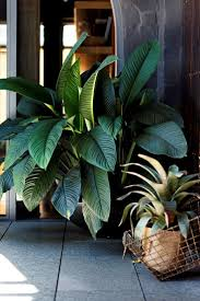 sweet viburnum 200mm pot viburnum 59 best plants images on pinterest gardening plants and gardens