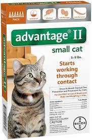 161 best cat flea and tick images on pinterest cat fleas tick