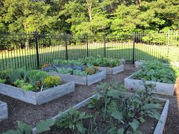 how to keep deer out of vegetable garden gardening ideas
