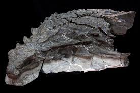 dinosaur preserved statue atlantic