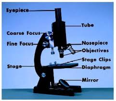 Parts Of A Compound Light Microscope Light Microscopy Biology Encyclopedia Cells Plant Body